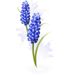 Nature background with blue flowers vector image