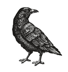 Hand-drawn black crow raven bird sketch vector