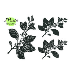 set branch silhouette vector image vector image