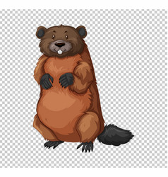 Beaver on transparent background vector