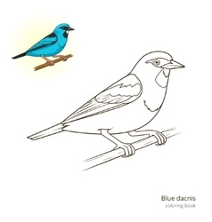 Blue dacnis bird educational game vector