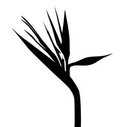 Birds of paradise silhouette vector