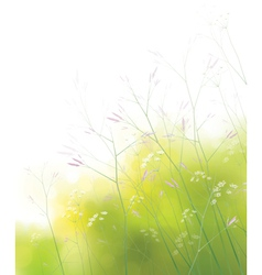 spring field background vector image vector image