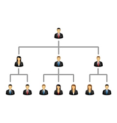 Business hierarchy structure vector image
