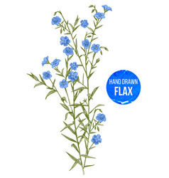 hand drawn colorful flax flowers vector image vector image