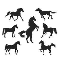 silhouettes of arabian horse vector image
