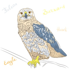 Cartoon colorful bird rough-legged buzzard vector