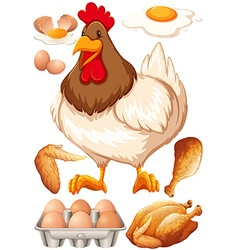 Chicken and chicken products vector image