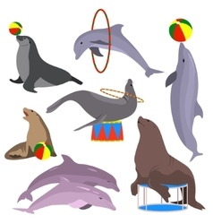 Marine circus animals set vector image