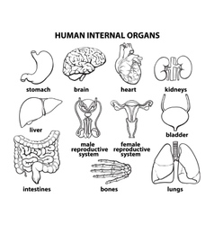 The internal organs of man set vector