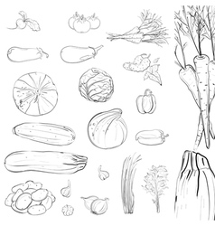 Fresh vegetables sketch collection vector