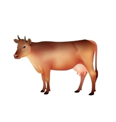Realistic brown cow vector