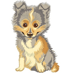 Cute puppy breed shetland vector