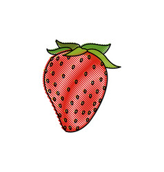 Draw strawberry fruit fresh food design vector