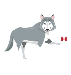 Big wolf with canadian flag icon vector