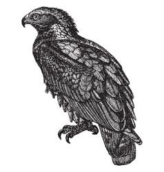 Golden eagle vintage vector