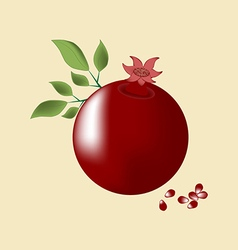 Pomegranate fruit icon vector