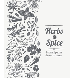 Herbs and spices decorative background vector image