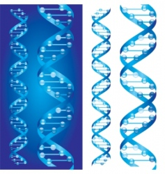 Dna chains vector