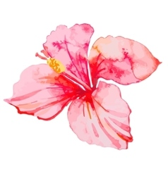 Set of tropical flowers hibiscus leaves vector
