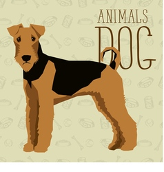 Airedale vector