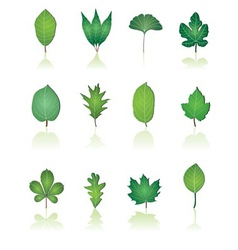 Tree leafs and nature icons vector