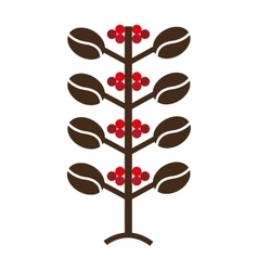 Coffee plant natural icon vector