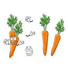 Cartoon ripe orange carrot vegetable vector image