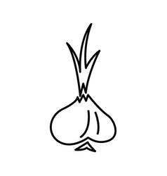 thin line garlic icon vector image