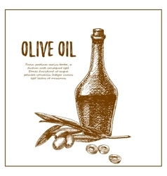 Olive branch with bottle hand drawn sketch vector