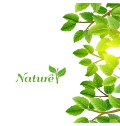 Green leaves nature background print vector