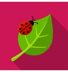 Ladybug on leaf icon vector image