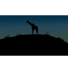 One giraffe silhouette in hills vector