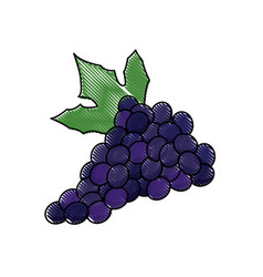 Draw grape bunch fruit leaf food design vector