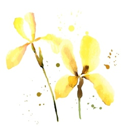 Iris watercolor can be used as greeting card vector