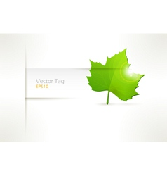 label with green leaf vector image