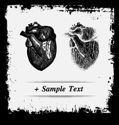 Paper art Human Spleen vector image