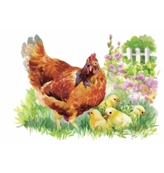 Watercolor hen and chicks in yard vector