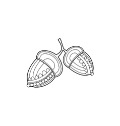 Acorns Zentangle For Coloring vector image