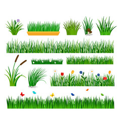 Growing grass template for garden vector