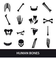 Human bones set of icons eps10 vector