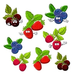 Strawberry raspberry blueberry and blackberry vector