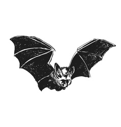 Hand sketch bat vector