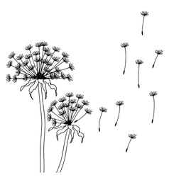 Dry dandelion flowers - abstract vector image