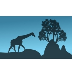 Silhouette of giraffe and rock vector