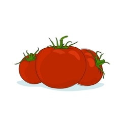 Tomatoes Isolated on White vector image vector image