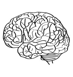 human brain outline sketched up vector image