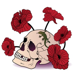 skull lizard and poppies vector image vector image