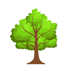 tree with green leaves element of a landscape vector image