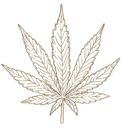 Engraving drawing of cannabis leaf vector